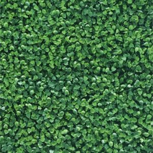 Green Buxus Large