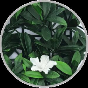 flower-foliage