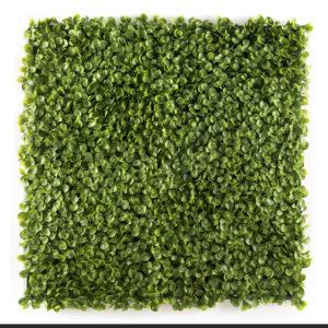 easyivy Succulent