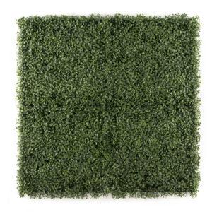 easyivy Green Buxus
