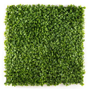 easyivy-Succulent