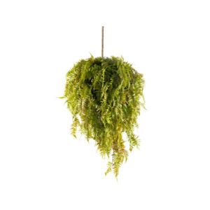 autumn-fern